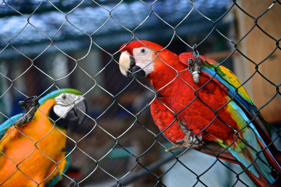Papagei und Mamagei