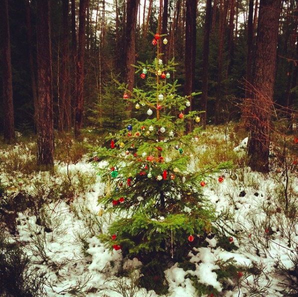 Waldweihnacht