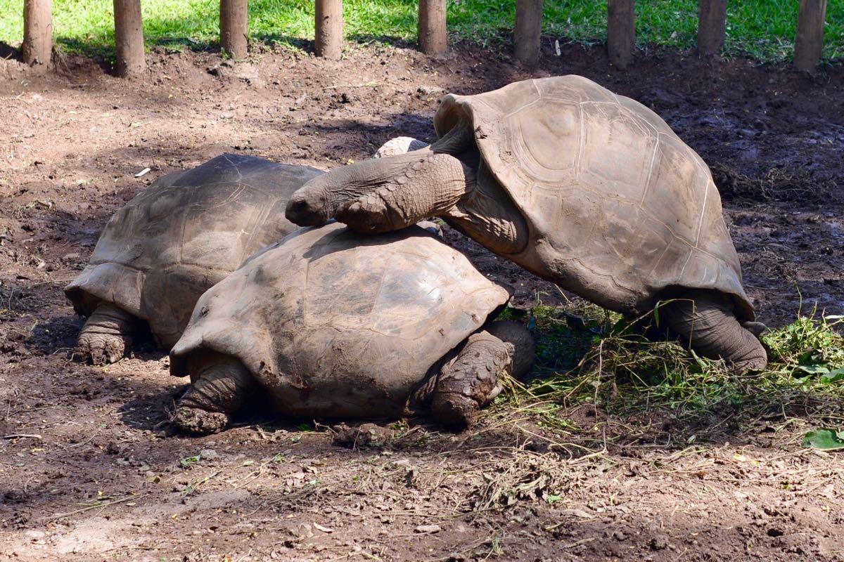 Video: Schildkröte im Liebesrausch
